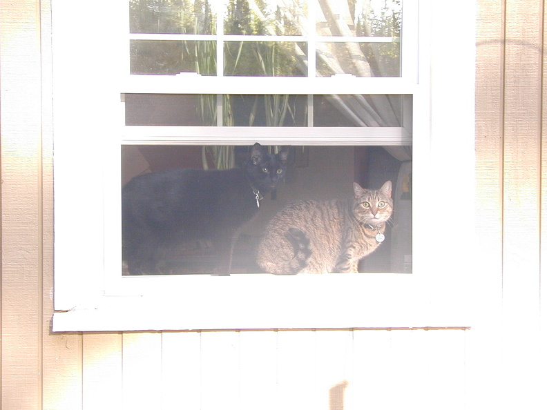 parker_winnie_window_4.jpg