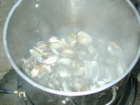cooked_clams_1.jpg