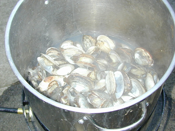 cooked_clams_2.jpg