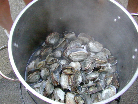 cooked_clams_3.jpg