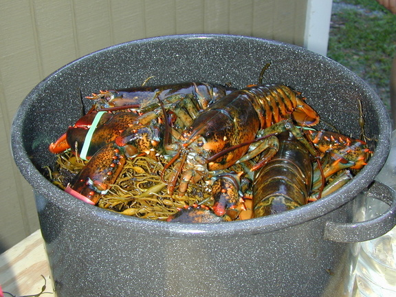 live_lobsters_2.jpg